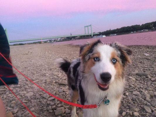 8 Monate - Sonnenuntergang am Rhein