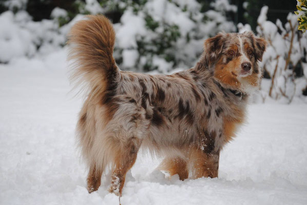 Abby (Rhine River's Tortured Tangles Heart) aus Ivy x Henry 2015