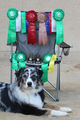 10/14 - Rheinbach: Ivy finished ihren RE und CD, macht 2 Legs im BN und holt ihr erstes Leg in Masters gleich mit einem 1. Platz!