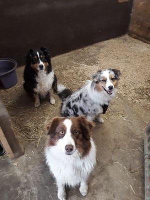 Hinten Tante Wonder, Ginger in der Mitte und vorne Ruby