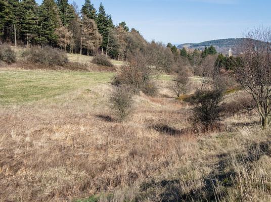 Blick in das Bachbett der Trüllke bei Goslar (März 2020) - Foto: Regine Schadach - Olympus OM-D E-M5 Mark II - M.ZUIKO DIGITAL ED 12‑100 1:4.0 IS PRO