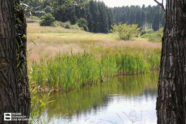 Reinbach-Quellwiesenbiotop Nordberg  auch ein wichtiger Lebensraum für Libellen, Amphibien und Reptilien. Juli 2013 Foto: Regine Schadach