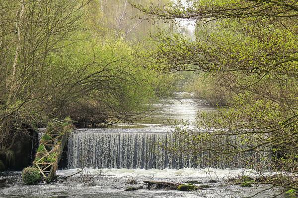 Lebensraum der Wasseramsel  NSG Oker südlich Vienenburg - Foto: Regine Schadach