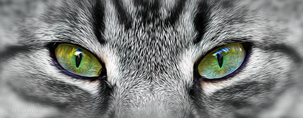 """""""Augen-Blicke"""" - Hauskatze - Foto: Regine Schadach - Olympus OM-D E-M1 Mark I I I - M.ZUIKO DIGITAL ED 40‑150mm 1:2.8 PRO"""
