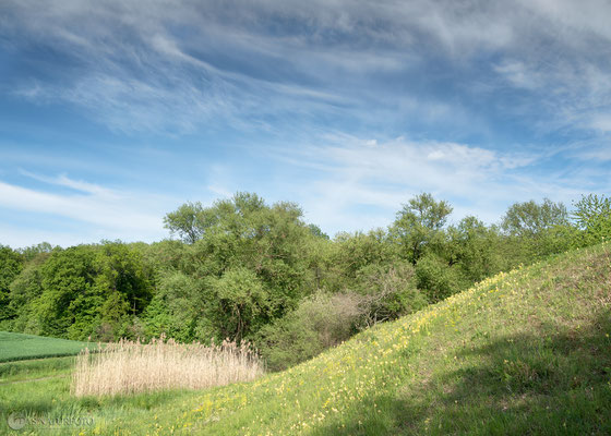 Mergelgrube Krähenholz Nordseite Mai 2019 - Foto: Regine Schadach - Olympus OM-D E-M5 Mark II - M.ZUIKO DIGITAL ED 12‑100 1:4.0 IS PRO