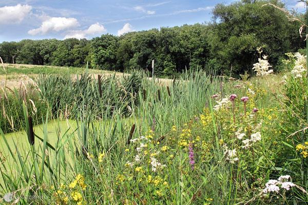 Mit Sonne sehen unsere Biotope doch gleich viel schöner aus! Krähenholz-Biotop nach den langen Regentagen.  2010 Foto: Regine Schadach