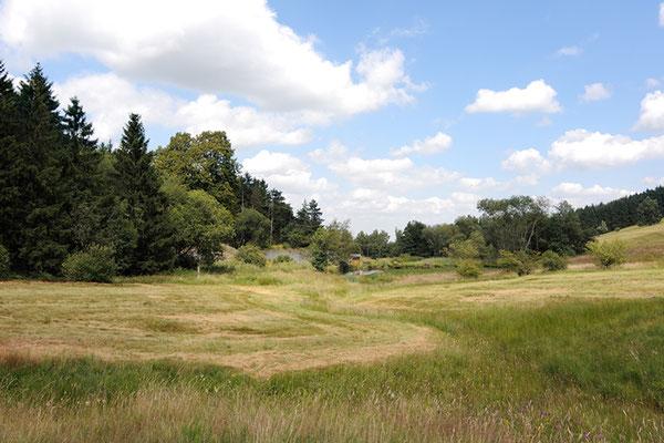 Reinbach-Quellwiesenbiotop Nordberg  im Juli 2013. Erste Teilflächen wurden wieder gemäht. Foto: Regine Schadach