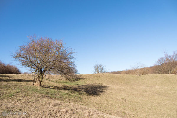 Südhang - Mergelgrube Krähenholz Februar 2019 - Foto: Regine Schulz Olympus OM-D E-M1 Mark II - M.ZUIKO DIGITAL ED 12‑100 1:4.0 IS PRO