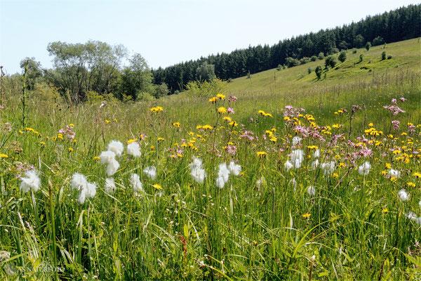Reinbach-Quellwiesenbiotop bei Goslar/Nordberg Juni 2013 Bild 001 Foto: Regine Schadach