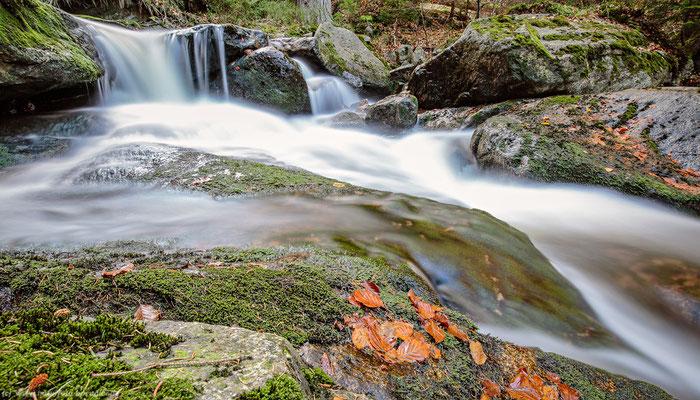 Die Ilse im Harz - 112 - Foto: Naturfotografie Engler