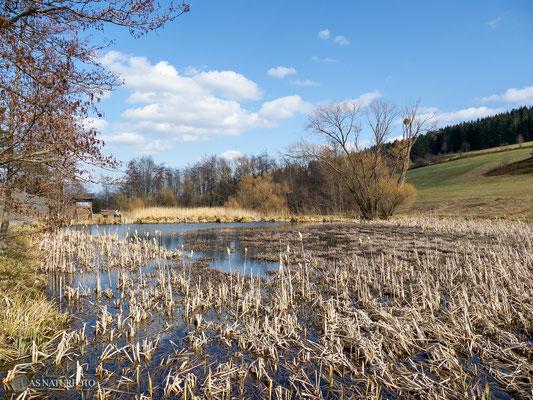 Reinbachquellwiesenbiotop am Nordberg 2021