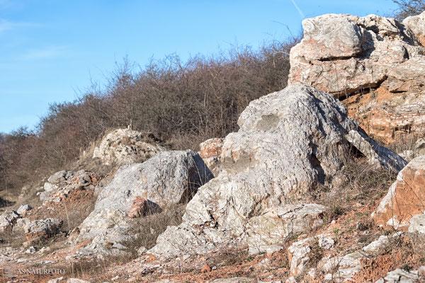 Durch Erosion geformter und freigelegter Gips (Gipskarren) Februar 2019 - Foto: Regine Schulz - Olympus OM-D E-M1 Mark II - M.ZUIKO DIGITAL ED 12‑100 1:4.0 IS PRO