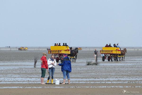 Cuxhaven-Duhnen - Bild 002 Foto: Regine Schulz