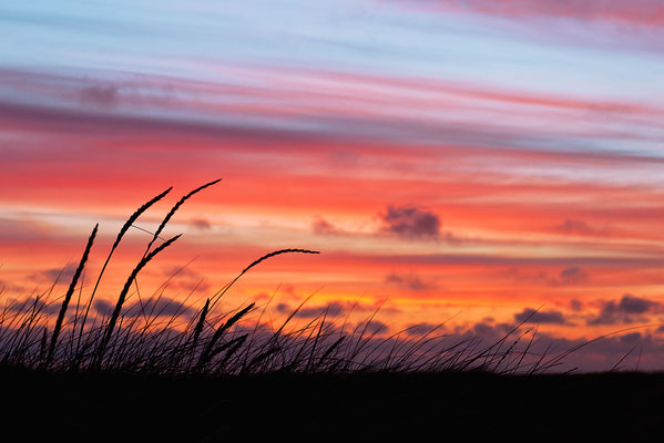 Sonnenuntergang an der Westjütlandküste bei Vrist - Bild 006 - Foto: Regine Schulz