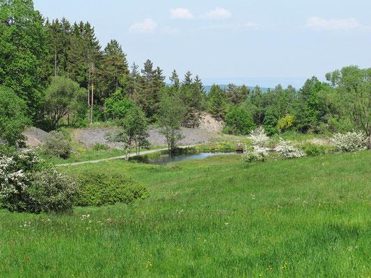 Reinbach-Quellwiesen-Biotop  Das Reinbach-Quellwiesenbiotop im Mai 2012 Foto: Regine Schulz