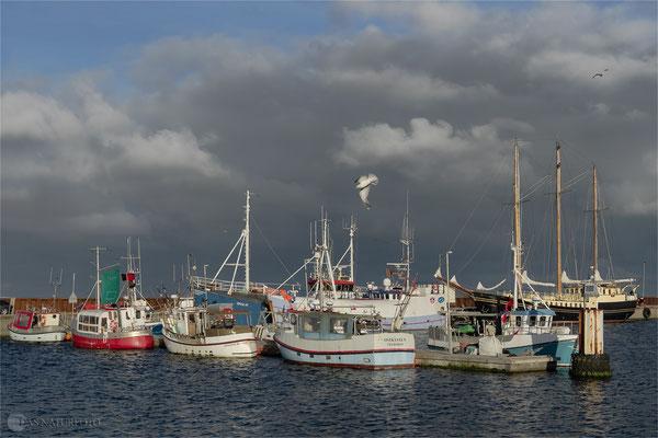 Dänemark Westjütland - im Hafen von Thyborøn - Bild 018 Foto: Regine Schadach - Olympus OM-D E-M5 Mark II - M.ZUIKO DIGITAL ED 12‑100 1:4.0 IS PRO