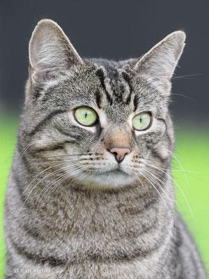 Hauskatze (Felis catus) Bild 009 - Foto: Regine Schadach  - Olympus EM1 X - M.ZUIKO DIGITAL ED 300mm F4.0 IS PRO