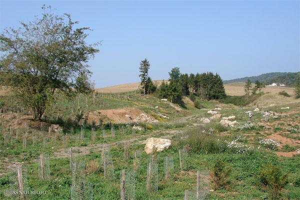 16. Setember 2009 - ein Jahr nach der Renaturierung des südlichen Teils der Gipskuhle - Foto: Regine Schadach