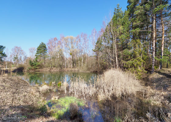 LK Goslar Teich bei Upen  April 2020