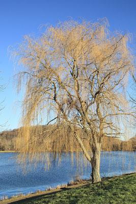 Vienenburger See bei Goslar - Januar 2015 - Bild 007 - Foto: Regine Schadach