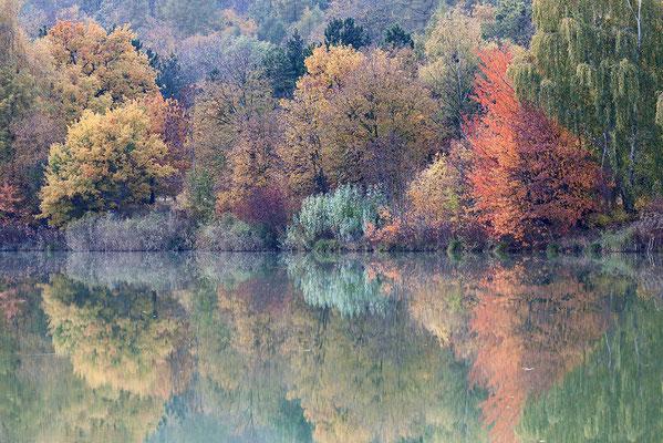 Naturschutzgebiet (NSG) Okertal südlich Vienenburg Oktober 2012 - Bild 002 - Foto: Regine Schadach