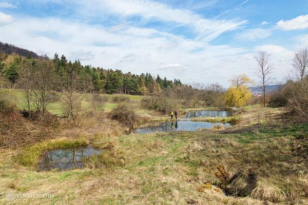 Amphibienbiotop im Trüllketal 2021