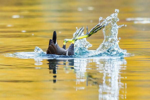 Teichhuhn (Gallinula chloropus) Bild 011 - Foto: Regine Schadach -  Olympus EM1 X - M.ZUIKO DIGITAL ED 300mm F4.0 IS PRO