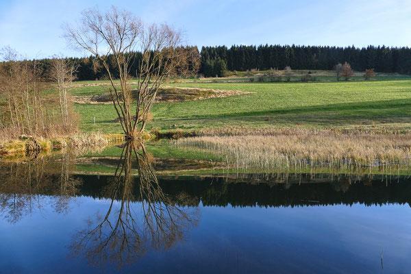 Quellwiesenbiotop Nordberg bei Goslar  am 09.11. 2014 Foto: Regine Schadach