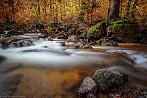 Herbst im Harz - das Ilsetal - Bild 111 - Foto: Naturfotografie Engler