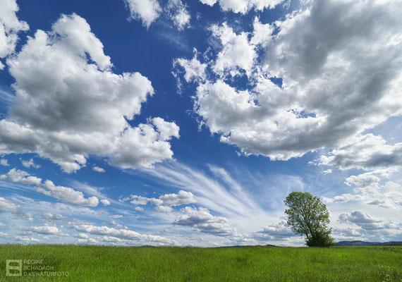 Clouds - richtungsweisend -  Foto: Regine Schadach - Olympus OM-D E-M1 Mark III - M.ZUIKO DIGITAL ED 7-14mm 2.8 PRO