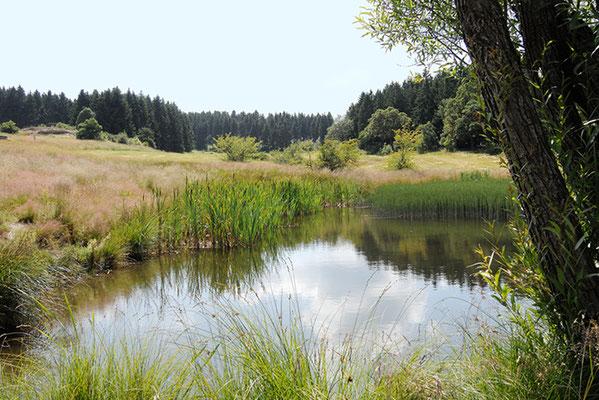 Reinbach-Quellwiesenbiotop Nordberg  im Juli 2013 - Foto: Regine Schadach