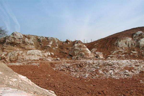 21. März 2009 - Fichten wurden gerodet und der saure Boden abgeschoben - sichtbar nun der anstehende Gips Foto: Regine Schadach