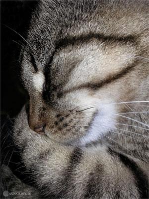 Hauskatze (Felis silvestris catus) Bild 002 Foto: Regine Schulz
