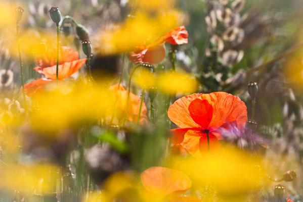 Sommer - Bild 001 - Foto: Regine Schulz
