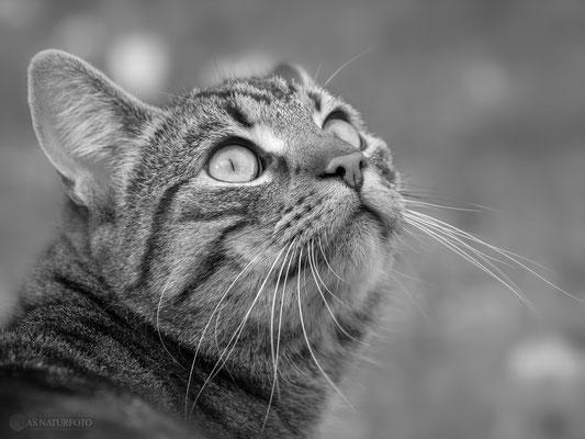 """Ich bin unschuldig!"" Hauskatze Bild 007 - Foto: Regine Schadach - Olympus OM-D E-M1 Mark II - M.ZUIKO DIGITAL ED 40‑150mm 1:2.8 PRO"