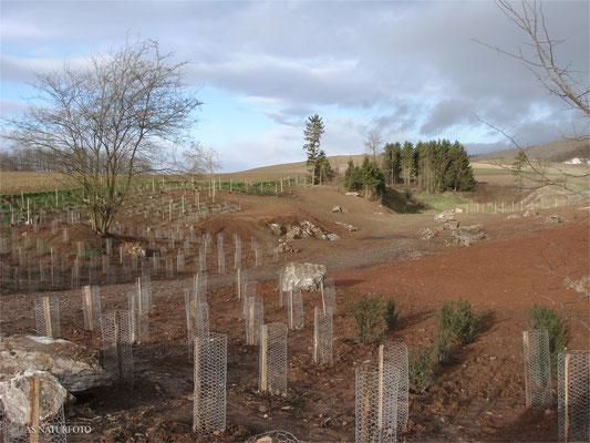 27. November 2008 - die Randbereiche der Kuhle - Gehölze für die Vögel und das Niederwild wurden gepflanzt - Foto: Regine Schadach
