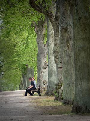 Prenzlau - Städtischer Friedhof - Ulmenallee - Foto: Regine Schadach - Olympus OM-D E-M1 Mark II - M.ZUIKO DIGITAL ED 12‑100 1:4.0 IS PRO