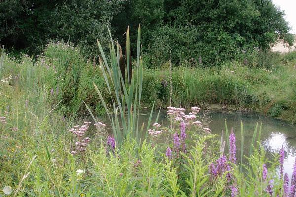 Einer von drei vorgelagerten Teichen am Krähenholz-Biotop mit einer üppigen Vegetation am Uferrand. Im Sommer 2009 fotografiert. Foto: Regine Schadach