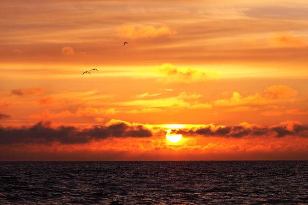 Sonnenuntergang an der Westjütlandküste bei Vrist - Bild 002 - Foto: Regine Schadach