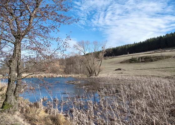 Reinbach Quellwiesenbiotop Nordberg - Februar 2020 - Foto: Regine Schadach - Olympus OM-D E-M5 Mark II - M.ZUIKO DIGITAL ED 12‑100 1:4.0 IS PRO