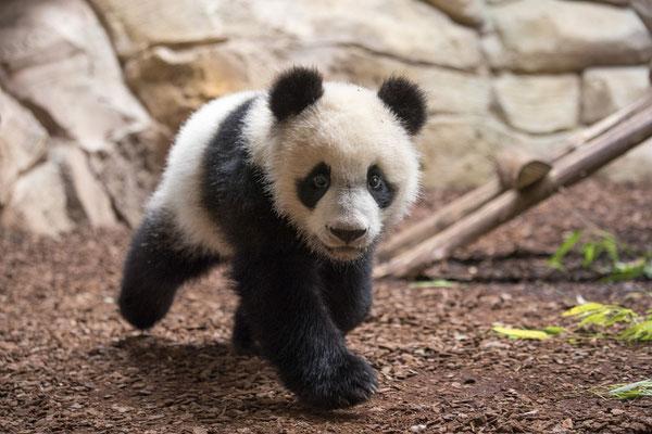 Crédit Photo : Zoo Parc de Beauval