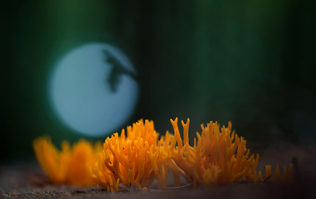 Märchenstunde, wer Fantasie hat sieht den Vollmond und die Fledermaus. Kein Fake, eine Originalaufnahme.