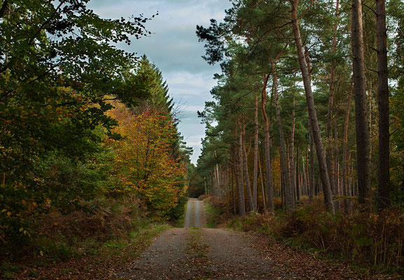 Reichswald bei Frasselt