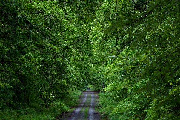 Reichswald bei Kleve