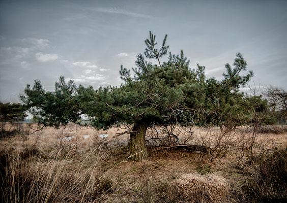 Maasduinen, NL