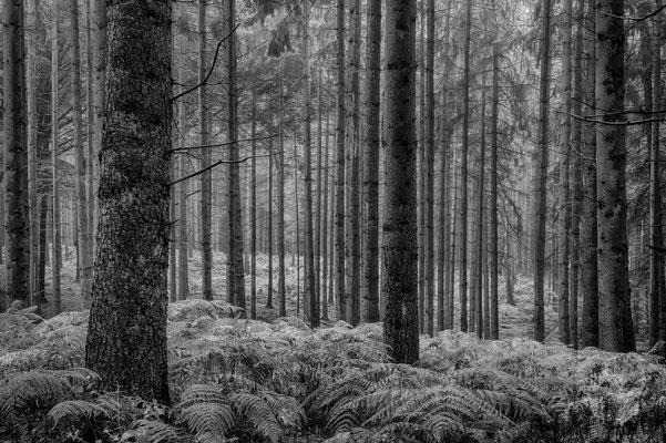 Rotkäppchens Wald