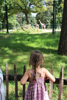 Unsere Kleine betrachtet die Giraffen im Zoo Frankfurt