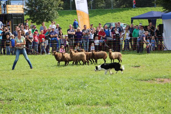 Schau-Schafehüten auf den Mainlandgames in Rüsselsheim