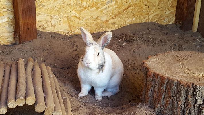 Unser Kaninchen Max in seinem selbstgebauten Kaninchenstall