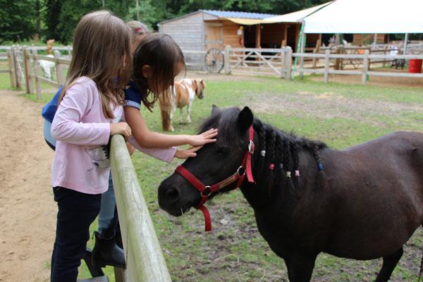 Die Ponys während ihrer Mittagspause auf der Weide: die Mädels schauen nach ihrer Nina